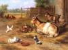 Ferme : We love animals of farm