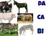 DaCaBi - fermier Farmzer
