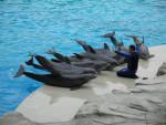 Dauphin Dolphin - Femelle (4 ans)